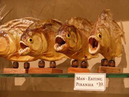 taxidermied piranhas with fake eyes for sale